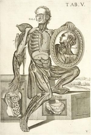 Art Anatomy Book