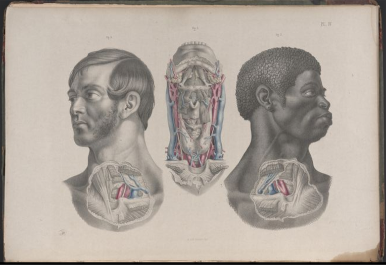 Illustrations from Surgical anatomy by Joseph, Maclise, 1856