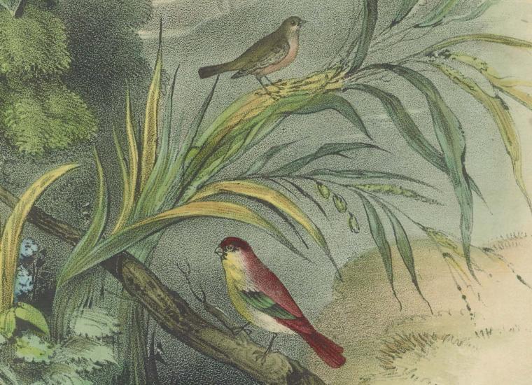 Sweet Robin music sheet