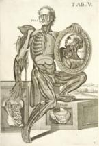 Tabulae anatomicae a celeberrimo pictore Petro Berrettino Cortonensi delineatae.