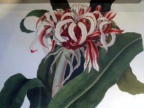Detail, A Selection of Hexandrian Plants, by  Priscilla Susan Bury. [London, 1831]  (GAX) NE2047.6.H384 B87 1831e